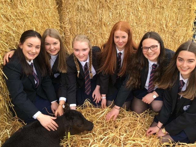 Irish Angus Finalists